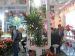 2012第十四届中国国际花卉园艺展览会展会图片